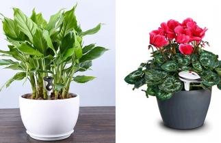 植物传感器